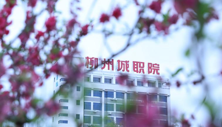 2019年柳州城市职业学院开设专业及招生专业目录表