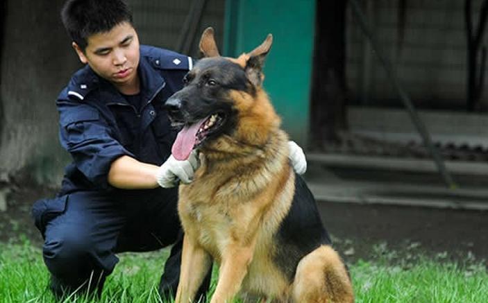 2019年全國警犬技術專業大學排名(20強)