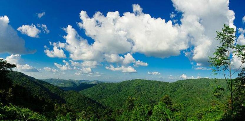 森林保护专业未来就业前景和就业方向分析(6篇)