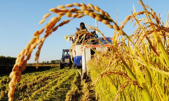 2019年粮食工程专业就业方向和就业前景分析(3篇)